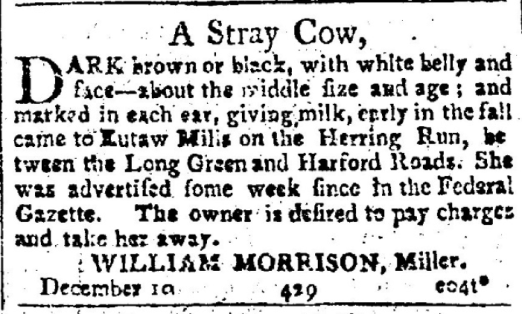 Stray Cow Ad